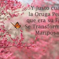 Vivir Mejor, un proceso de transformación