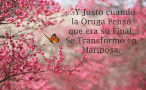 oruga-renacer-mariposa