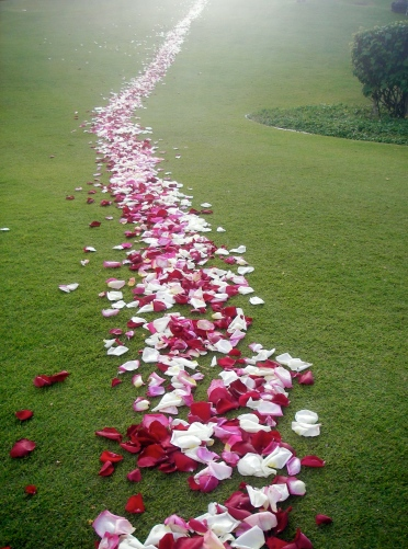 rose_petal_path_724316_o