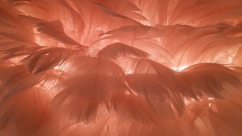 seducc feather-1063583_960_720